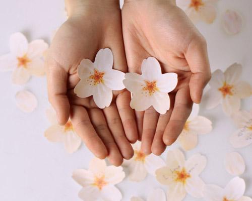 cherry-blossom-memo-stickers-designboom-shop-500