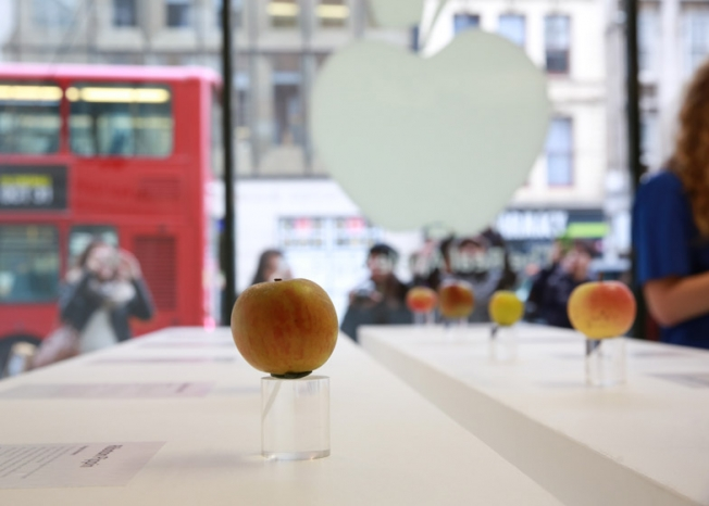 the-real-apple-store05