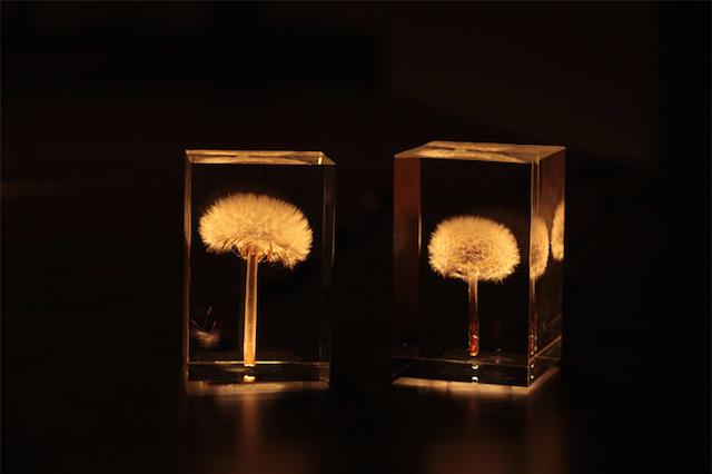 dandelionlight-1